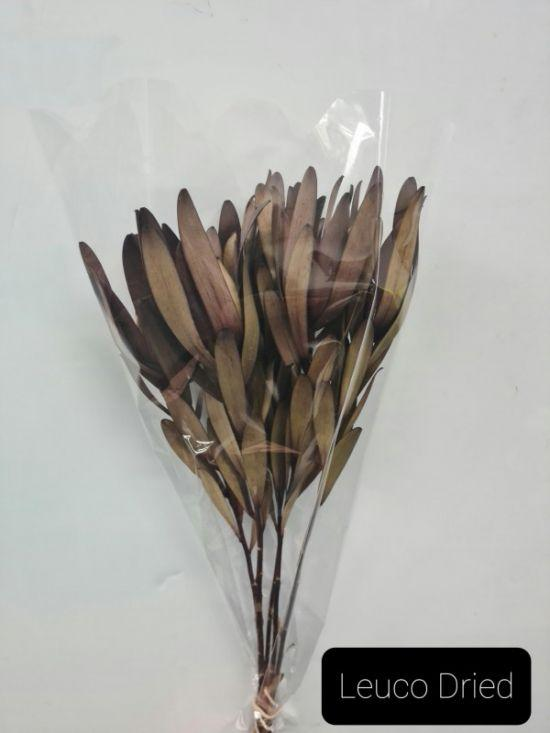 Leucodendron Red (dried)