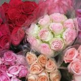 Roses - Colombian Medium - standard various colours