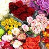 Roses - Colombian Premium - standard various colours