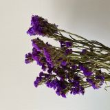 Statice Purple - Dried