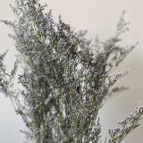 Caspea Limonium Supreme Purple - Dried