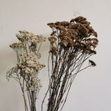 Achillea - Yarrow (Dried) Natural