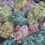 Gypsophila - Preserved - Pink and Green only