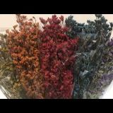 Limonium (Caspea) - Preserved - Orange, Burgundy, Pink, Red